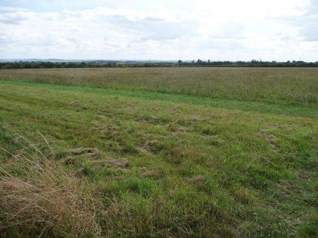 Uncultivated field margin, near College Plantation
