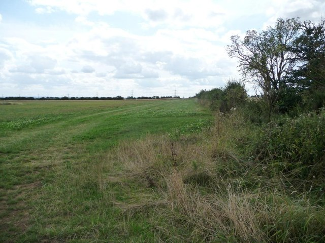 Uncultivated field margin, south-west of College Farm