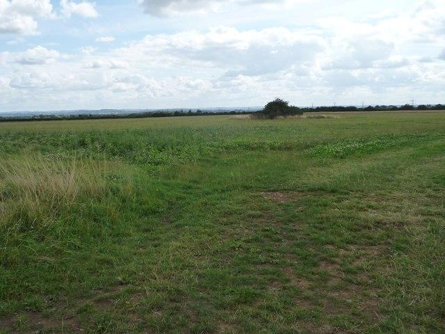 Clover-rich farmland, south-west of College Farm