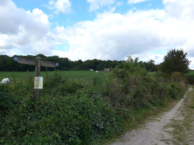 South Downs Way, Winchester to Exton (64)