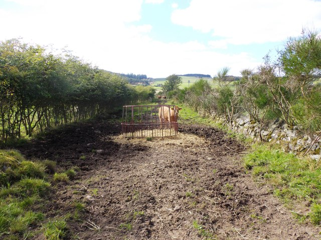 Stock-feed pen on track from Birley