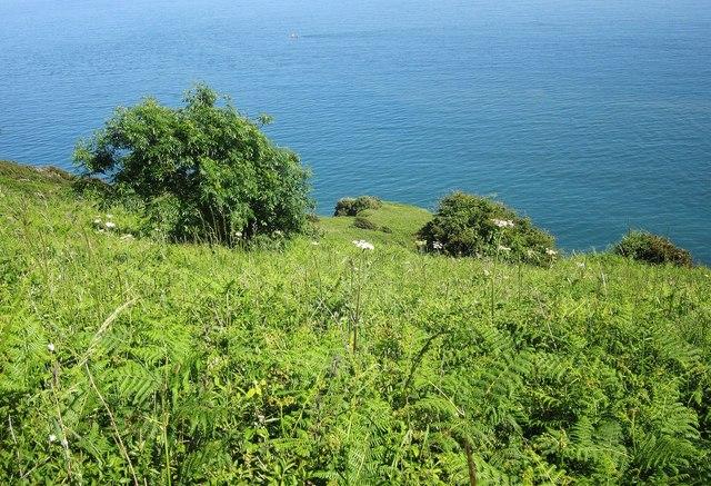 Coastal slope, Southdown Cliff
