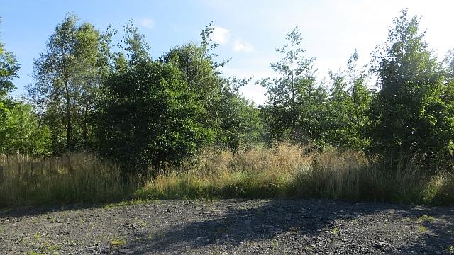 Balhearty Wood