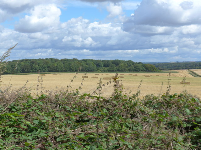South Downs Way, Winchester to Exton (69)
