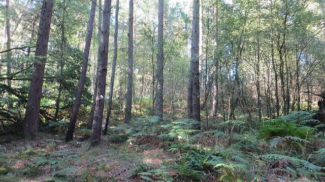 Aberdona Wood