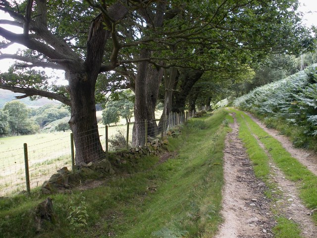Track below Conwy Mountain