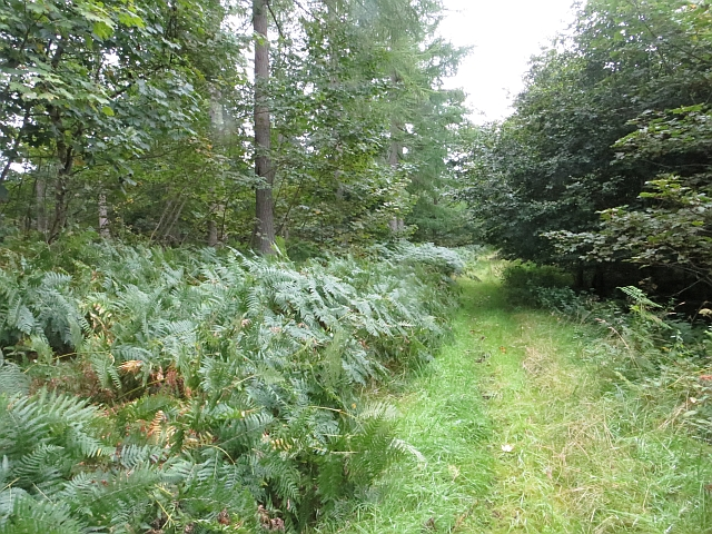 Track, Duns Wood