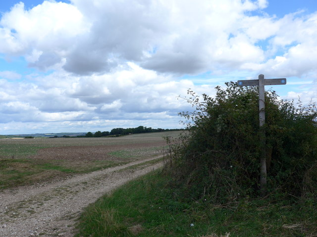 South Downs Way, Winchester to Exton (77)