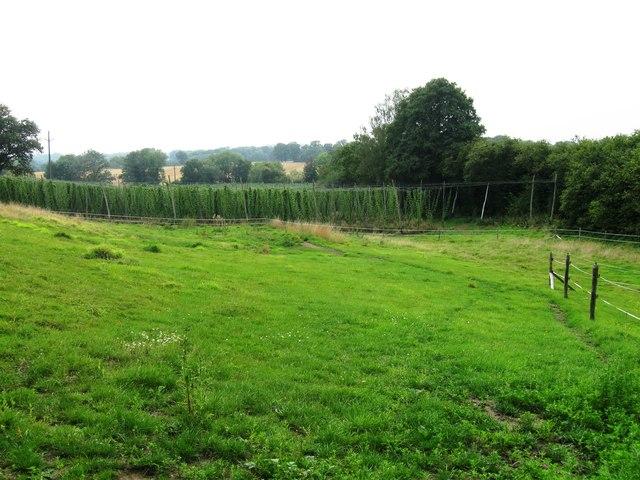 Hop field