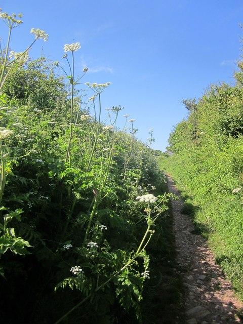 Path to Brixham