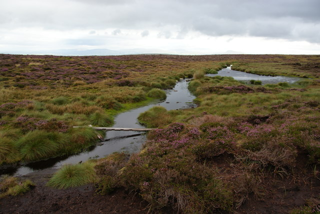 A soggy bit on Plover Moss