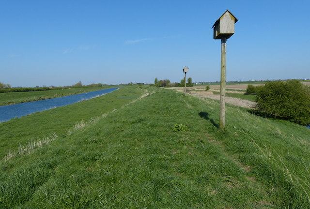 Owl boxes atop the river bank