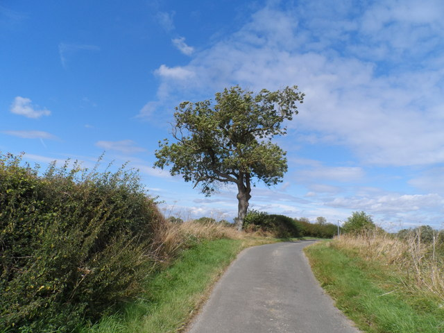 Solitary tree on road to Lillingstone Lovell