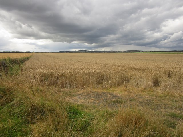 Arable field north of Boulmer