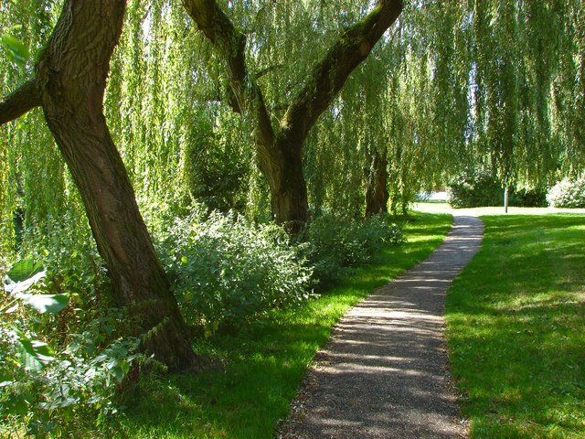 Walkway through the willows