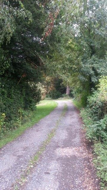 Driveway to Birchwood House