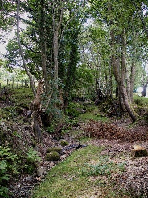 Hollow way near Tyddyn Rhobin