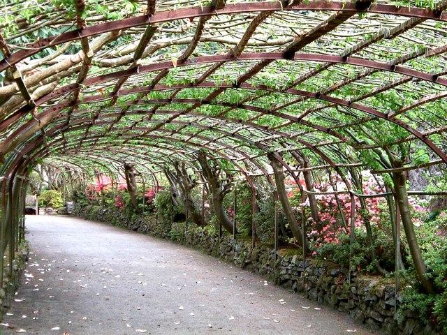 Laburnum arch Bodnant Garden