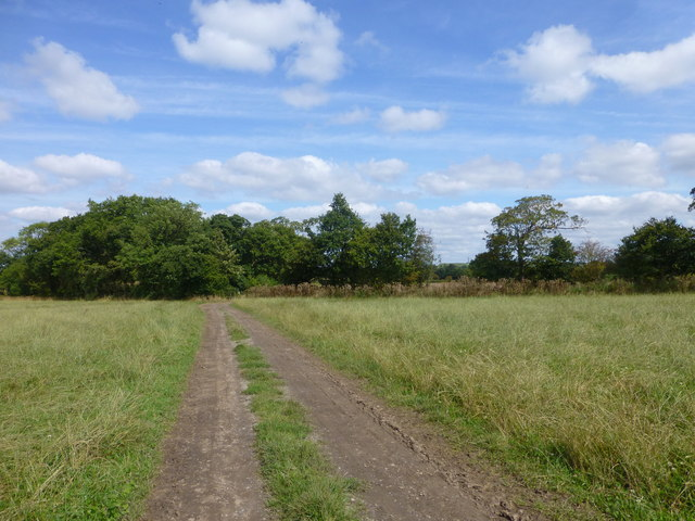 Delamere way approaches a copse near Hurst Farm