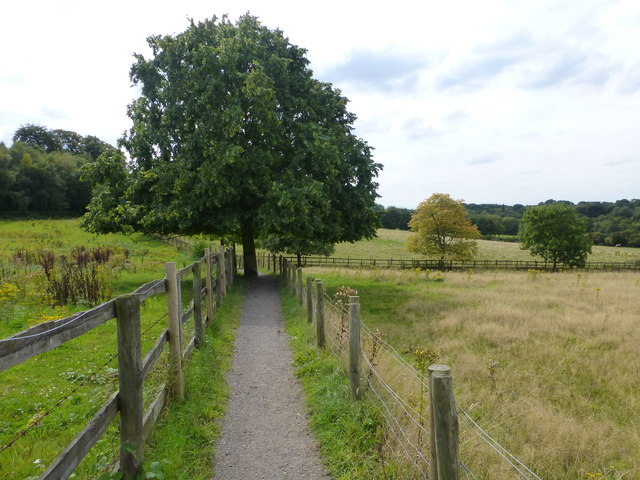 The Mersey Valley Trail at Hill Cliffe