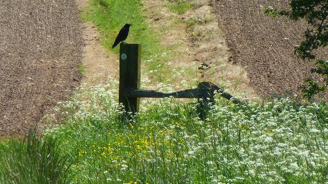 Stile on the footpath to Pirton Church