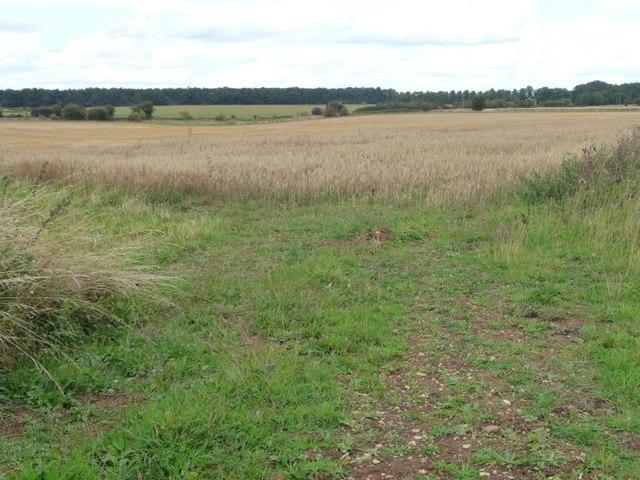 Oat field south-west of Filkins Down Farm