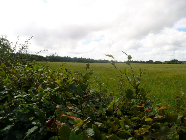 Field by Orchardton