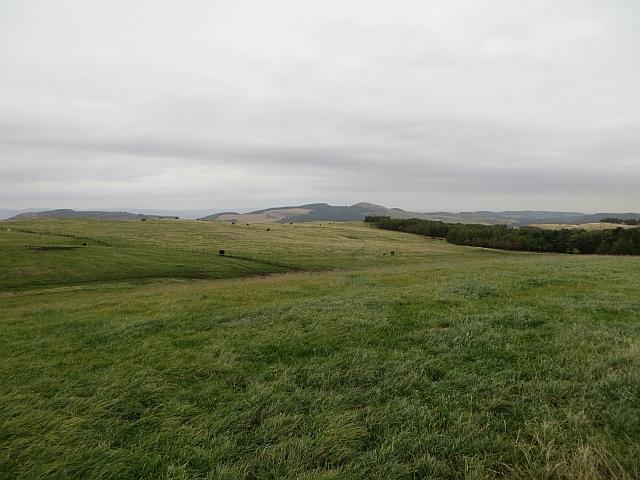 Grassland, Dunbog Hill