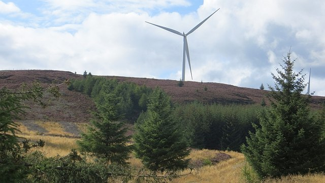 Griffin Forest and wind farm