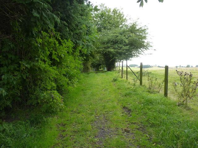 Overgrown lane