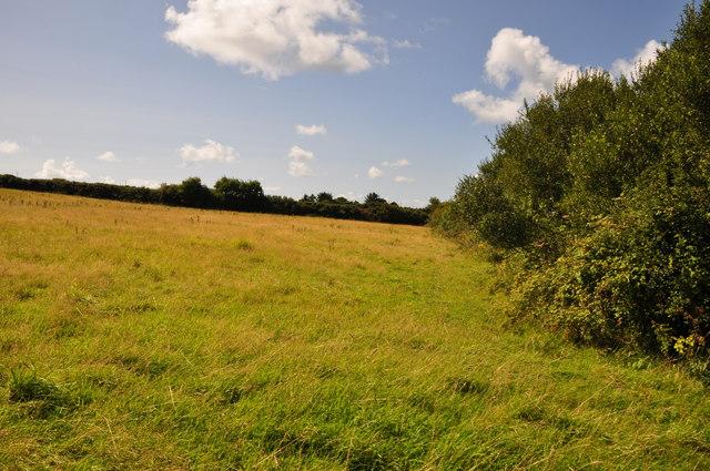 North Devon : Grassy Field