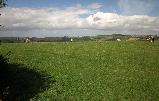 Cattle near Greenawell
