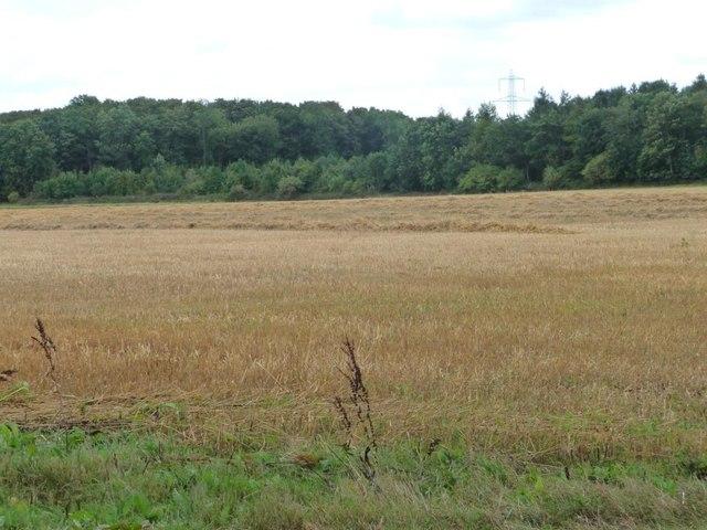 Eastern boundary of Broughtondowns Plantation