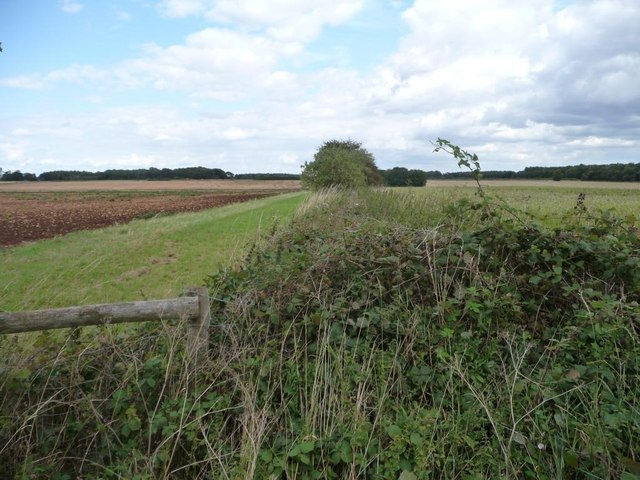 Field boundary, north of Bembury Lodge Plantation