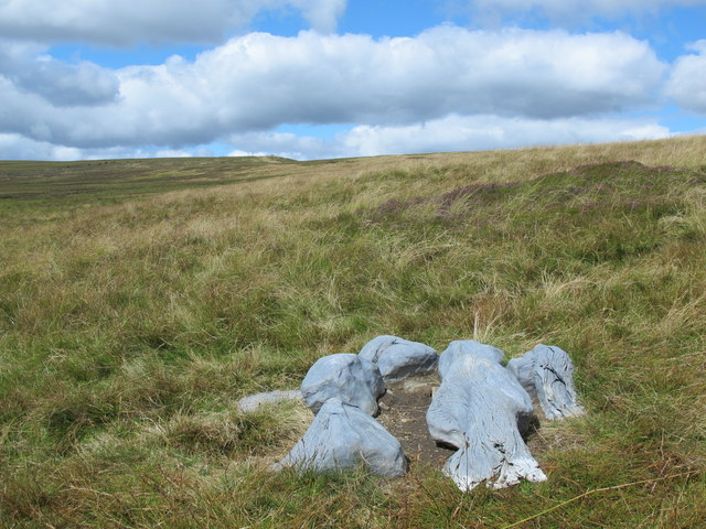 """Petrified trees"" on the eastern slopes of Killhope Law"