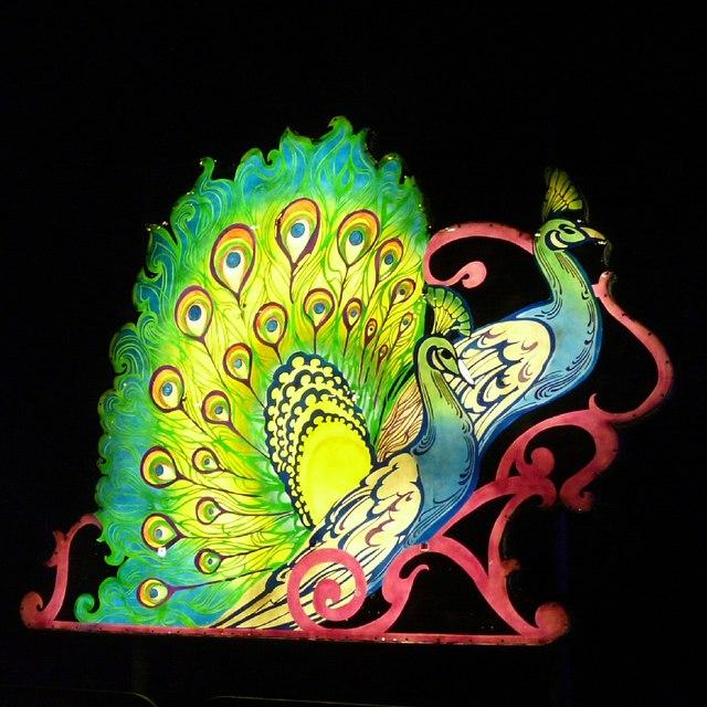 Peacock at the Illuminations