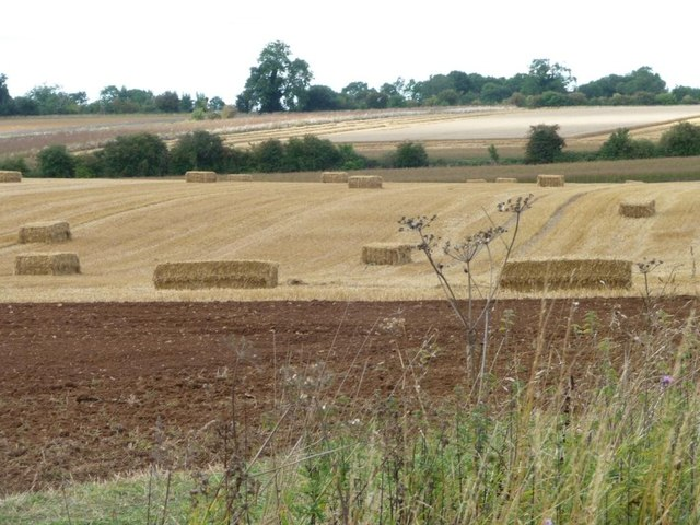 Harvest-time near Downs Farm