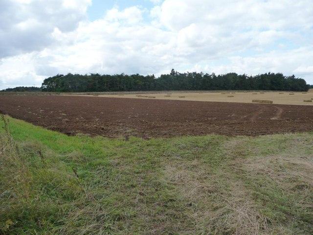 Nameless plantation, west of Downs Farm