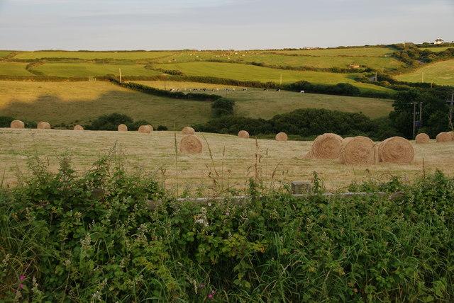 Fields near Mullion
