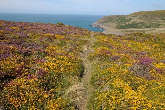 Path above Porth Llanllawen
