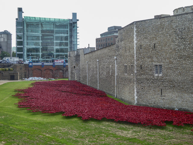 Poppies in Moat of Tower of London, London E1