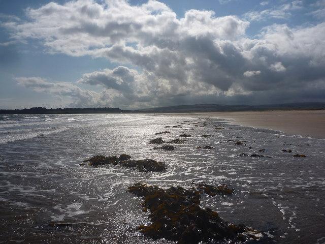 Coastal East Lothian : Seaweed, Belhaven Bay