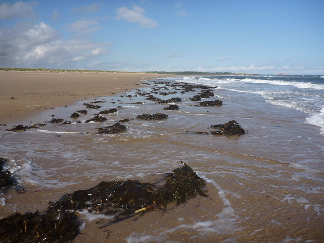 Coastal East Lothian : Seaweed, Belhaven Sands