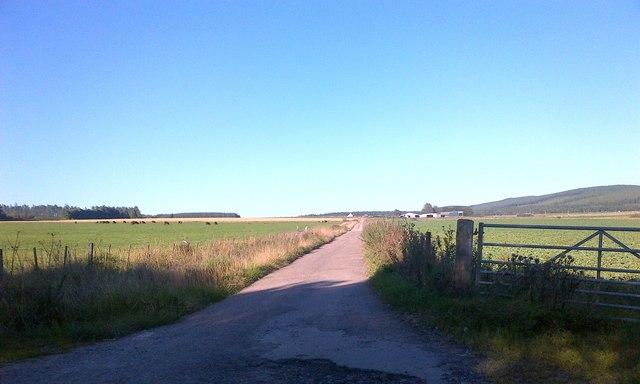 Road to Upper Whitebog