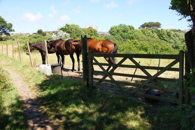 Horses in Ruan Minor