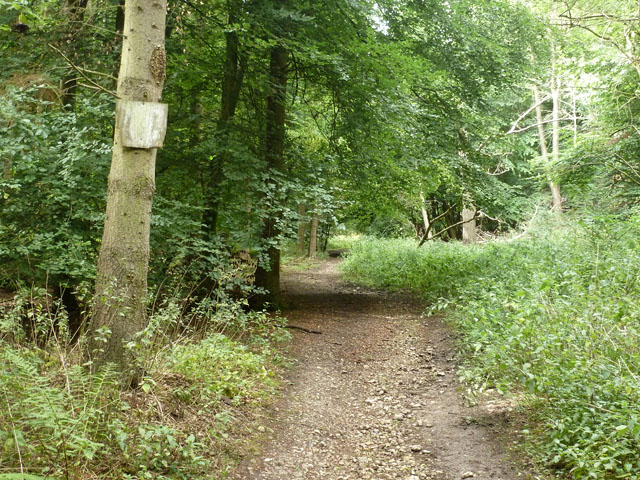 Bridleway in Baldwin's Wood