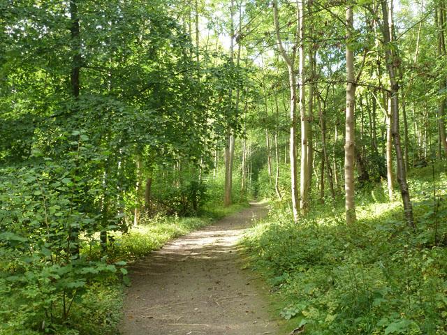 Path in Carpenter's Wood