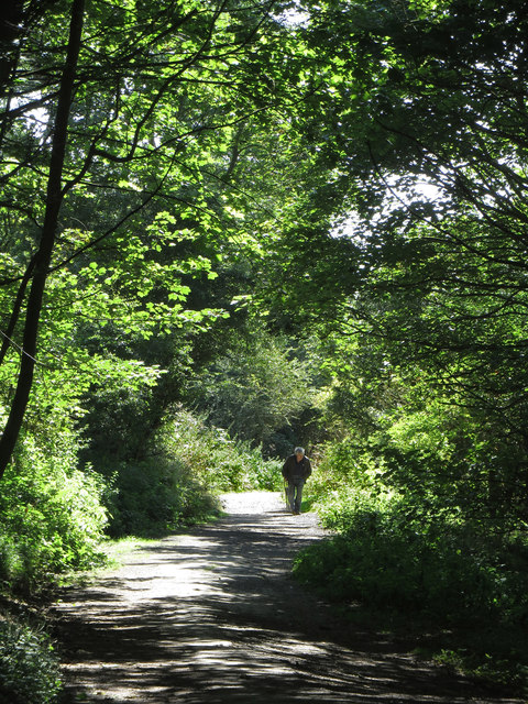 Path through the nature reserve