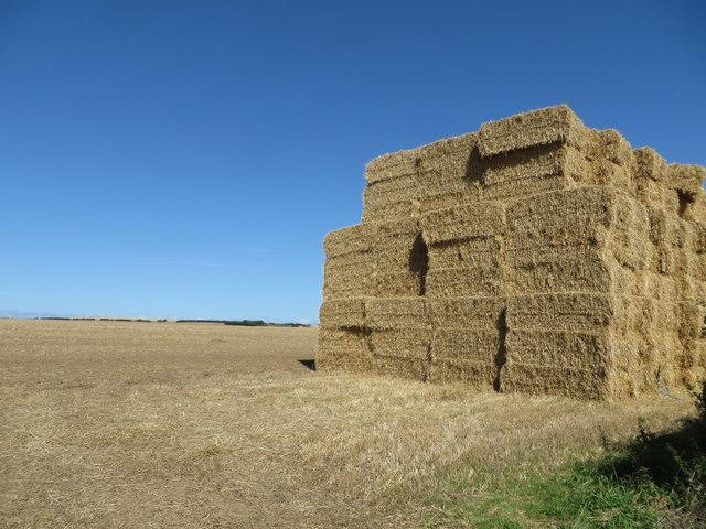Giant haystack off Bempton Lane
