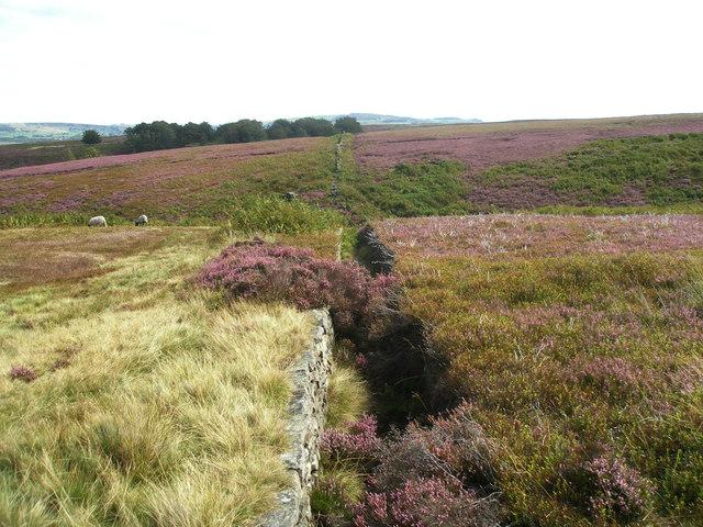 Along the wall towards Short Grain Head